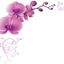 flower-گل (356)