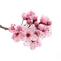 flower-گل (357)