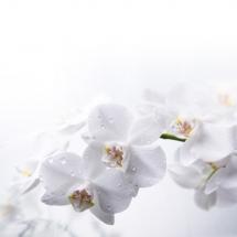 flower-گل (36)