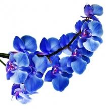 flower-گل (361)