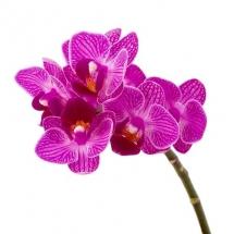 flower-گل (363)