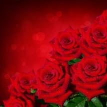 flower-گل (365)