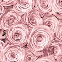 flower-گل (368)