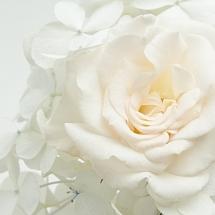 flower-گل (369)