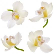 flower-گل (37)