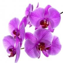 flower-گل (372)