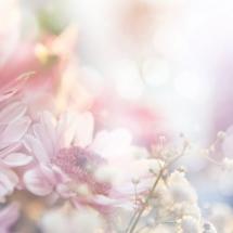 flower-گل (373)