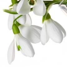 flower-گل (374)