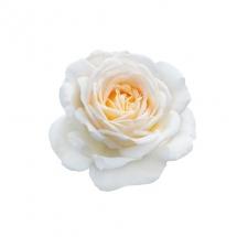 flower-گل (375)