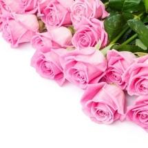flower-گل (376)