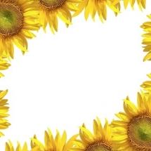 flower-گل (378)