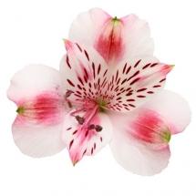 flower-گل (38)