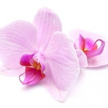 flower-گل (39)