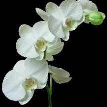 flower-گل (4)