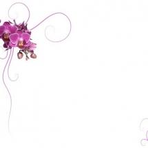 flower-گل (40)