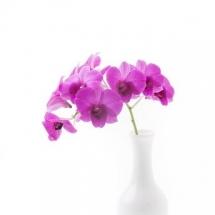 flower-گل (41)