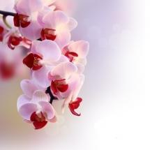 flower-گل (43)