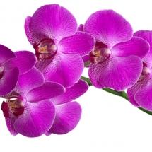 flower-گل (44)