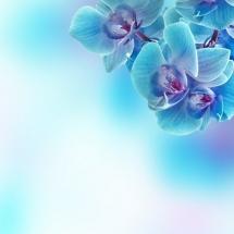 flower-گل (45)