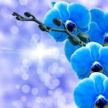 flower-گل (46)