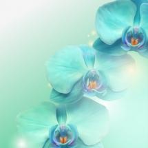 flower-گل (47)