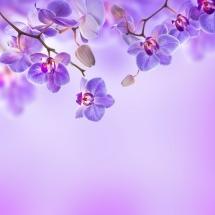 flower-گل (48)