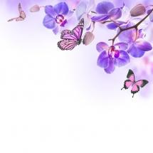 flower-گل (49)