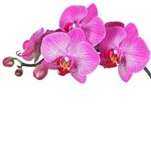 flower-گل (5)