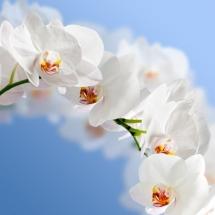 flower-گل (50)