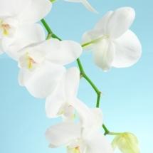 flower-گل (51)