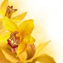 flower-گل (52)