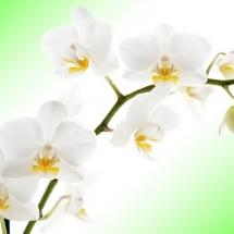 flower-گل (53)