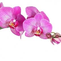flower-گل (55)