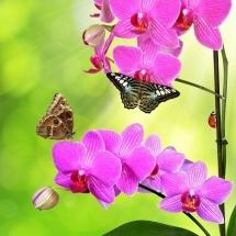 flower-گل (57)