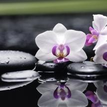 flower-گل (58)