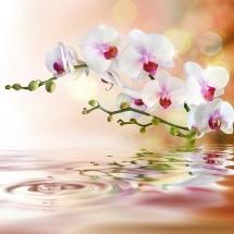 flower-گل (6)