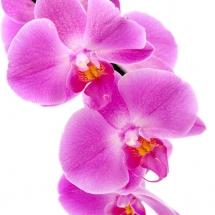 flower-گل (62)