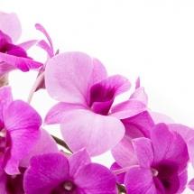 flower-گل (63)