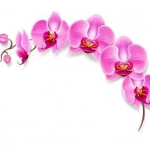 flower-گل (64)