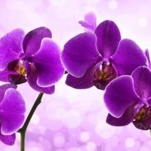 flower-گل (65)