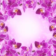 flower-گل (66)