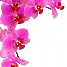 flower-گل (67)