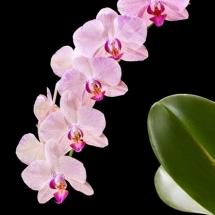 flower-گل (68)