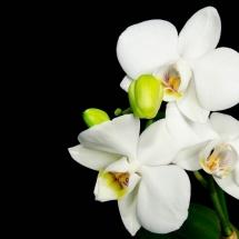 flower-گل (70)