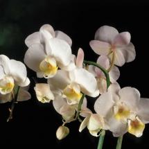 flower-گل (71)