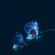 flower-گل (72)