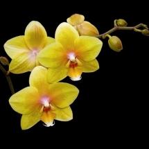 flower-گل (73)