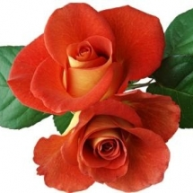 flower-گل (76)