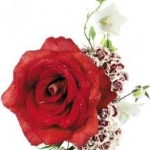 flower-گل (77)