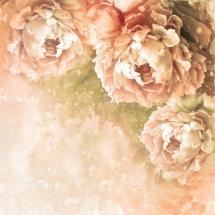 flower-گل (8)